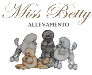 allevamento miss betty barboni toy